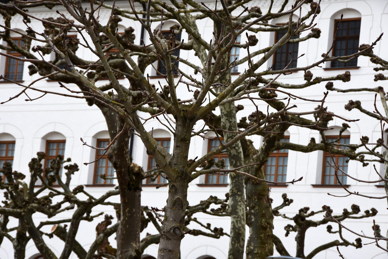 Tree geometry